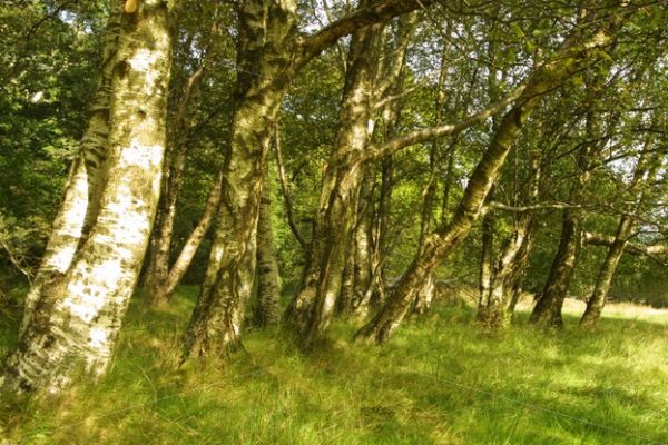 Glendalough, Wicklow landscape trees stock image - Interior, Architectural & Advertising Photographer with a library of house features for publishers